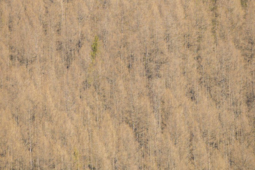 Mŕtva časť lesa. Fotograf Branislav Bruder
