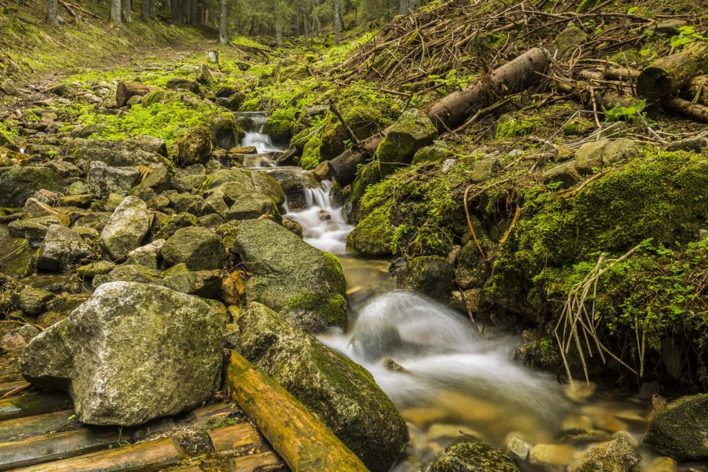 Lesný potôčik fotograf Branislav Bruder Osobitá Západne Tatry