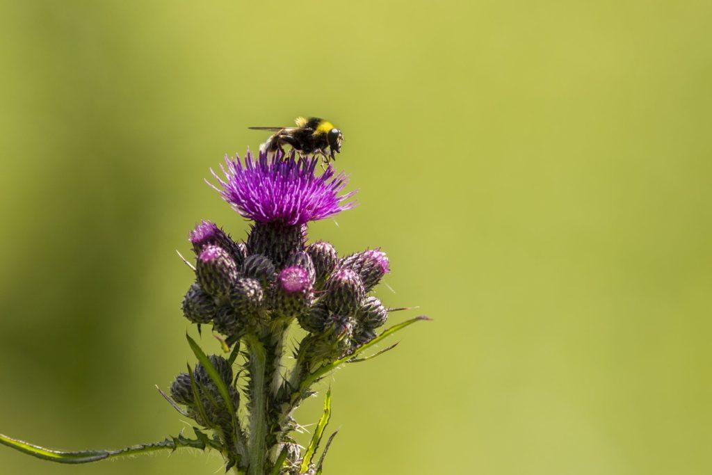 Bodliak a hmyz. Branislav Bruder fotograf