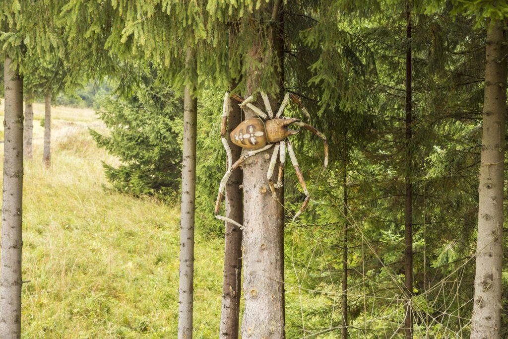 Pavúk na strome. Oravská lesná železnica. Fotograf Branislav Bruder