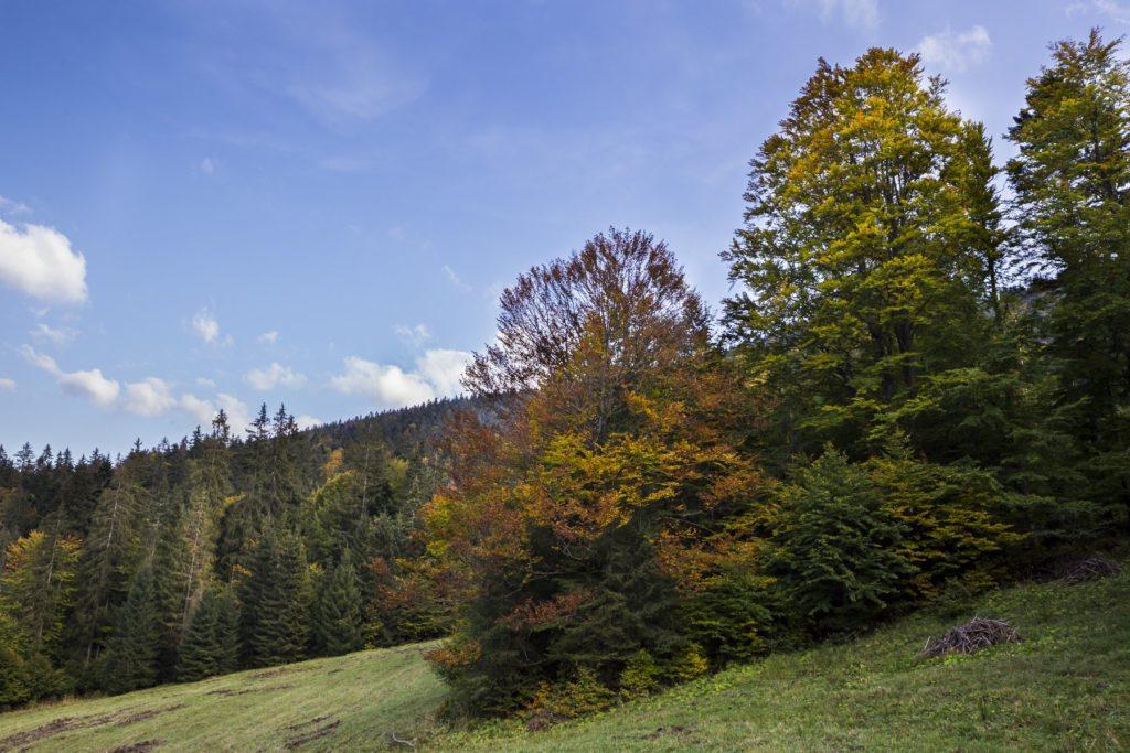Jeseň sa hlási. Fotografia Branislav Bruder