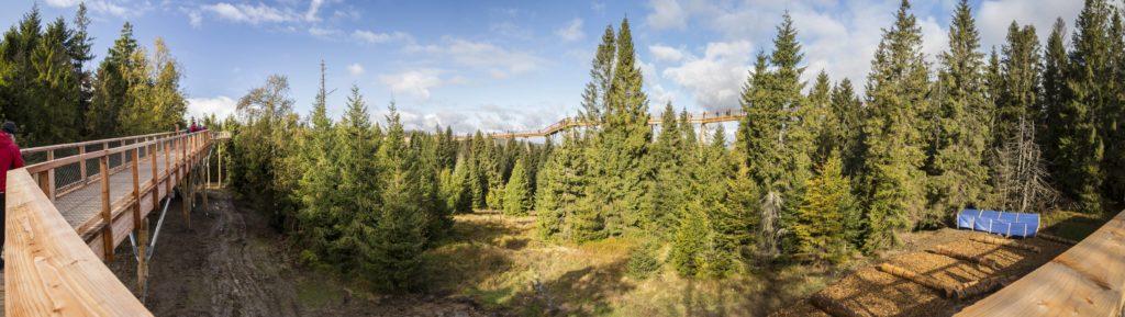 Chodník korunami stromov Bachledka. Branislav Bruder - Fotograf
