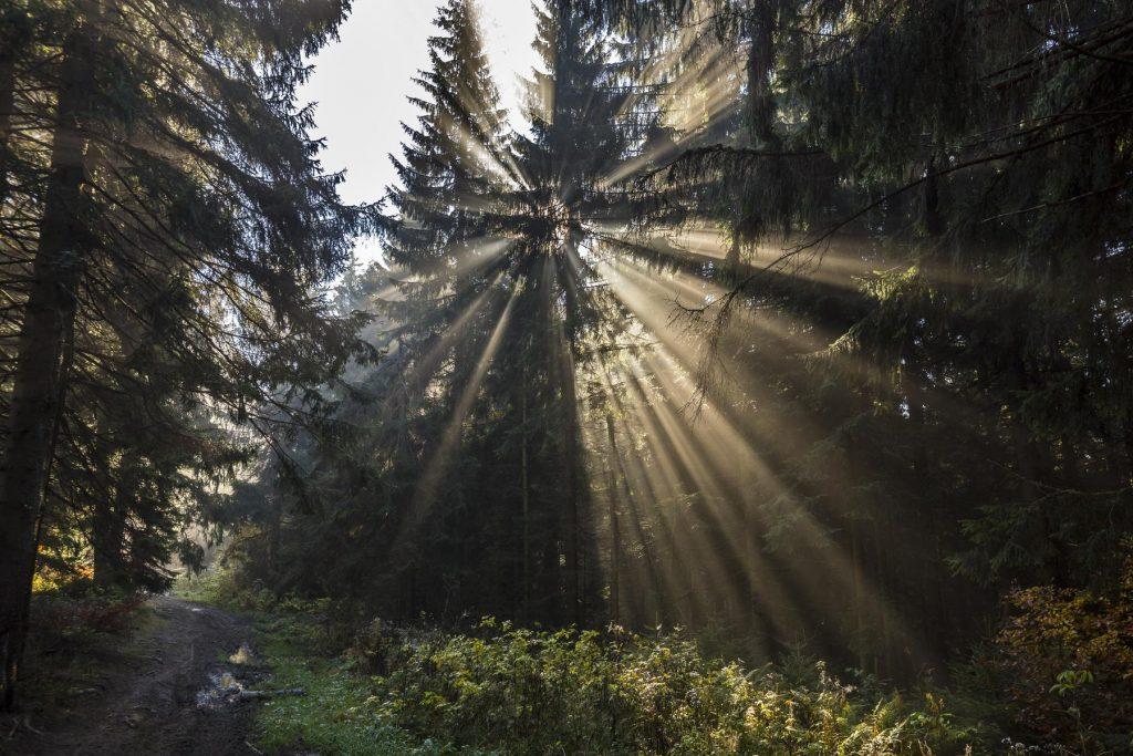 Slnko a lúče, Branislav Bruder