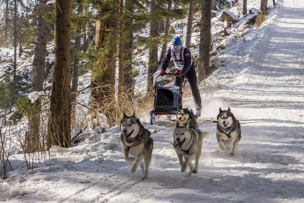 Jeden z posledný pretekárov sobotu, psie záprahy, 2018, Zuberec, Branislav Bruder